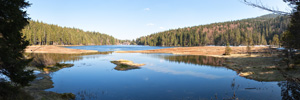 Arbersee Forest Panorama